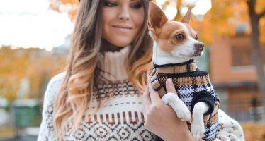 Top 15 des applications animaux de compagnie pour Android et iOS