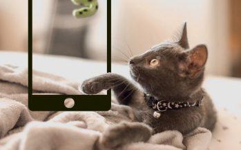 7 jeux de chat pour votre iPad ou tablette Android